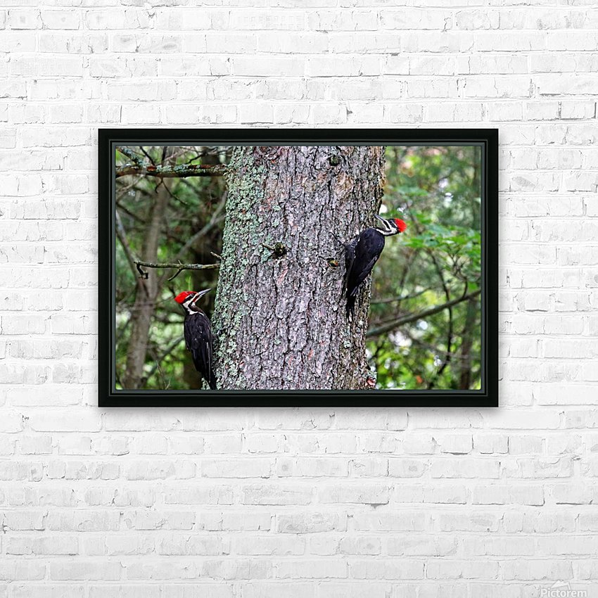 Male And Female Pileated Woodpeckers HD Sublimation Metal print with Decorating Float Frame (BOX)