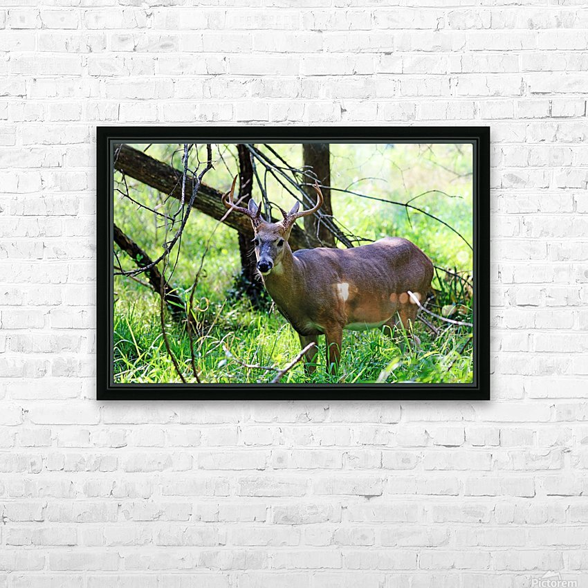 A Buck In The Grass HD Sublimation Metal print with Decorating Float Frame (BOX)