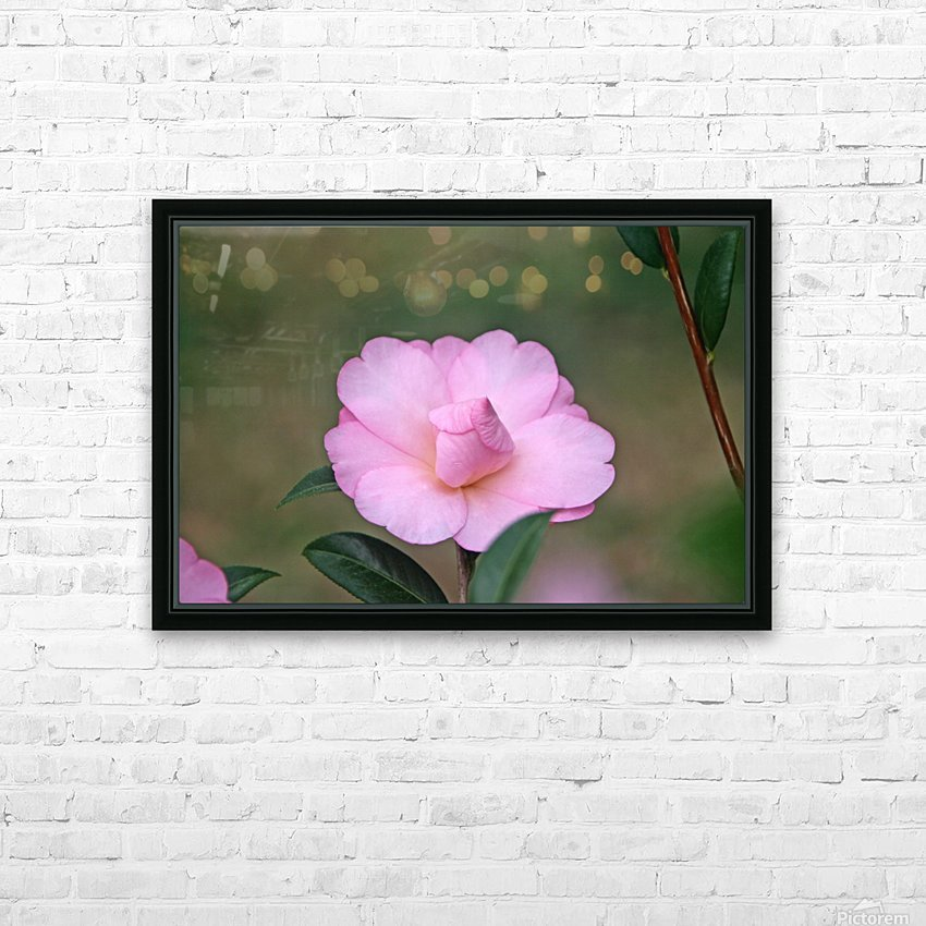 Pink Camellia HD Sublimation Metal print with Decorating Float Frame (BOX)