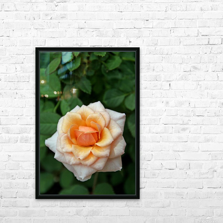Pretty as a Rose HD Sublimation Metal print with Decorating Float Frame (BOX)