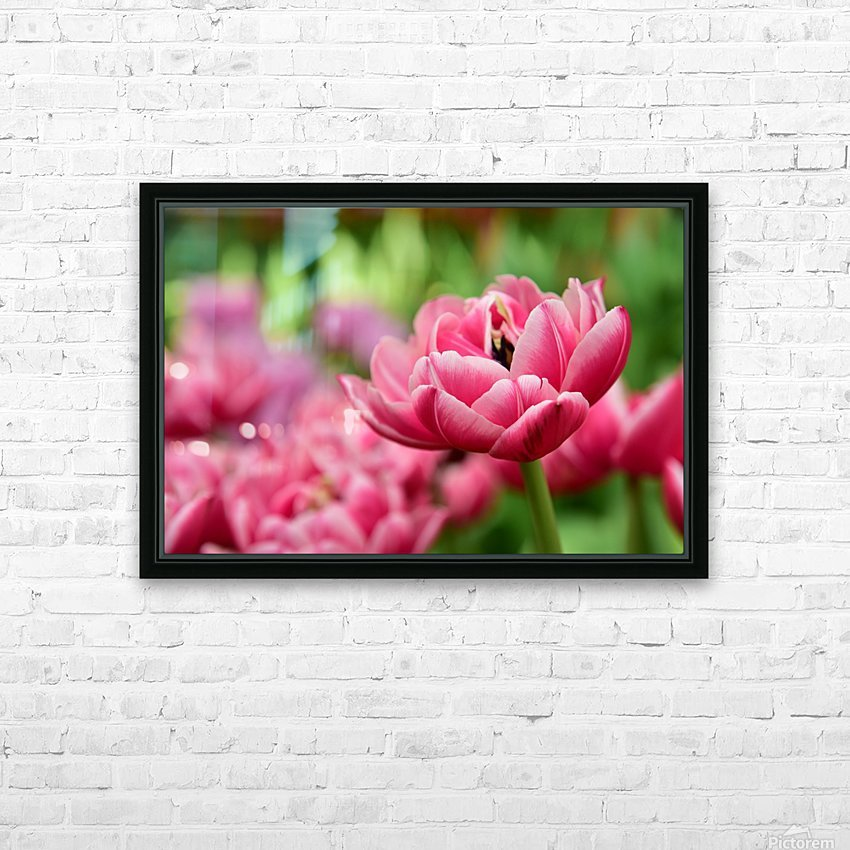 Plants - Flowers - 013 HD Sublimation Metal print with Decorating Float Frame (BOX)