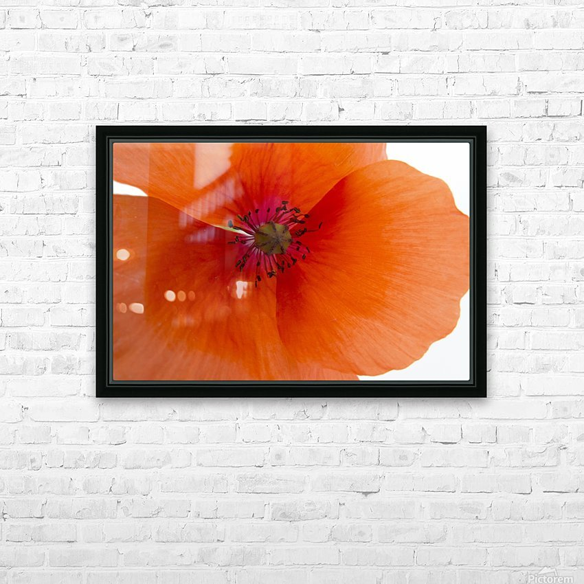 Orange Poppy Flower HD Sublimation Metal print with Decorating Float Frame (BOX)