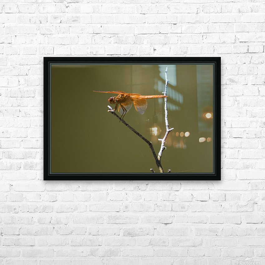 Orange Dragonfly HD Sublimation Metal print with Decorating Float Frame (BOX)