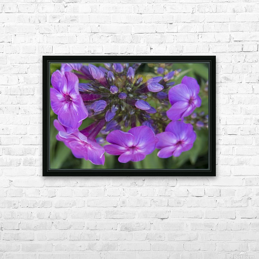 Purple Flower Blooming HD Sublimation Metal print with Decorating Float Frame (BOX)