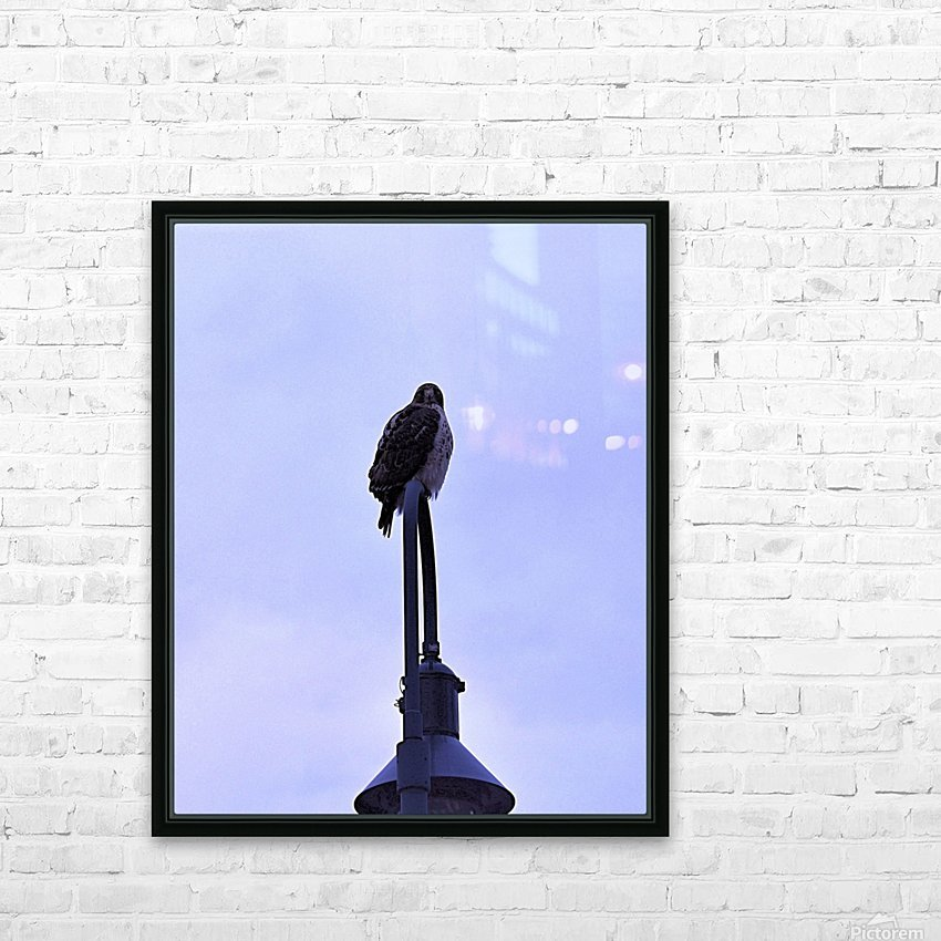 12.5.18 Hawk HD Sublimation Metal print with Decorating Float Frame (BOX)