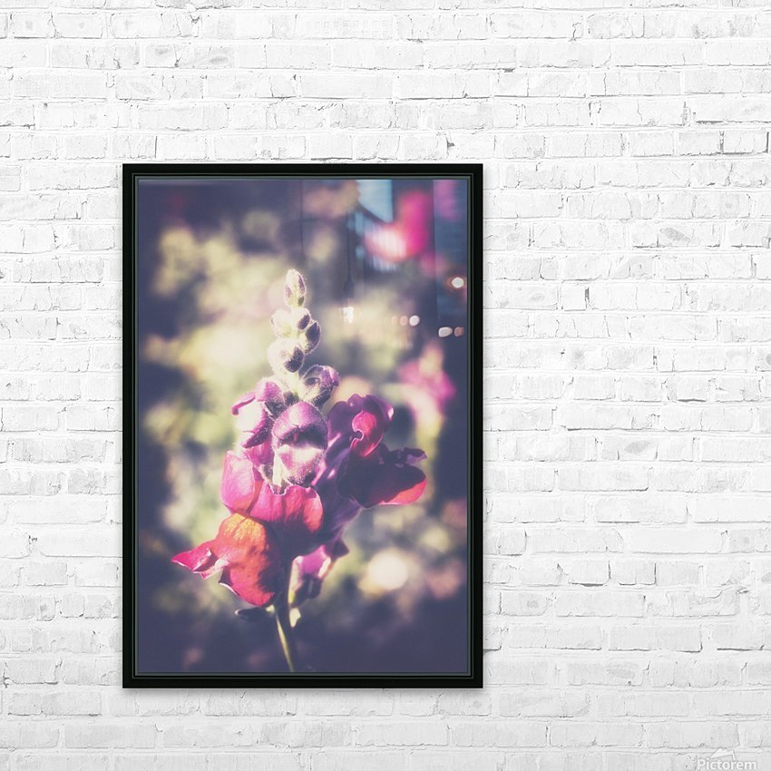 Lupine Fuchsia HD Sublimation Metal print with Decorating Float Frame (BOX)