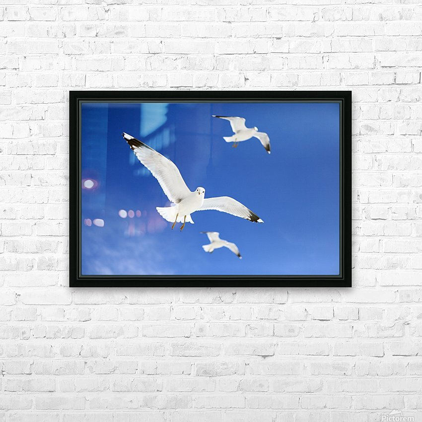 Seagulls HD Sublimation Metal print with Decorating Float Frame (BOX)