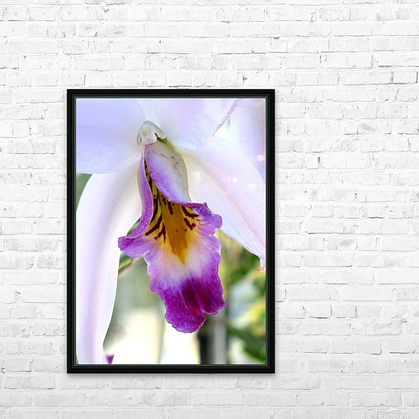 Orchid Poem HD Sublimation Metal print with Decorating Float Frame (BOX)