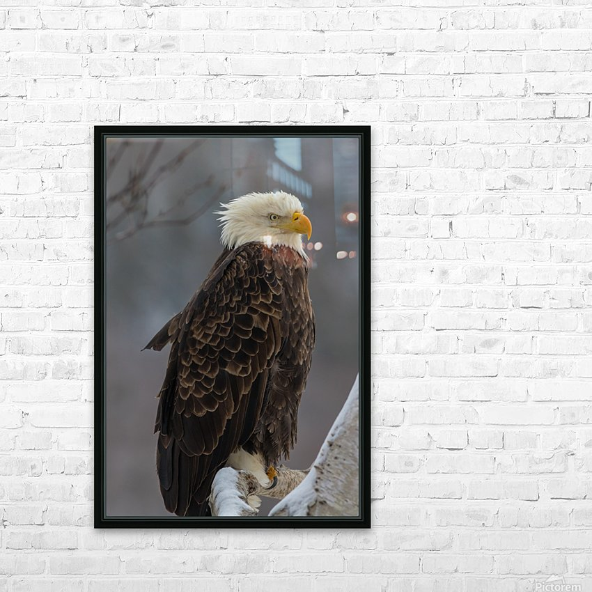 Bald eagle in tree HD Sublimation Metal print with Decorating Float Frame (BOX)