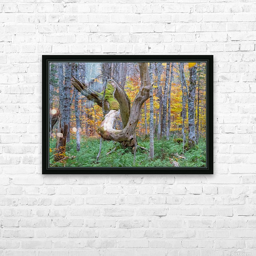 Old dead tree HD Sublimation Metal print with Decorating Float Frame (BOX)