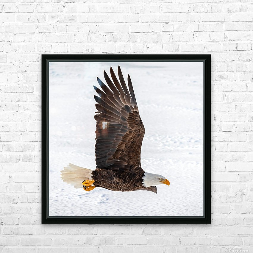 Bald Eagle HD Sublimation Metal print with Decorating Float Frame (BOX)