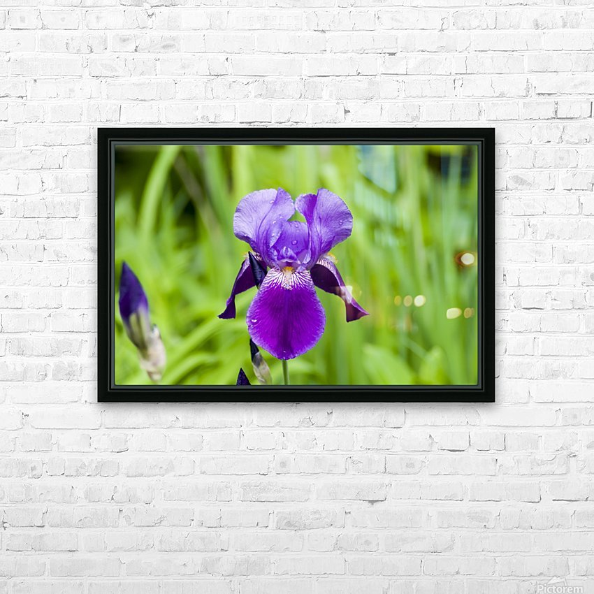 Purple Bearded Iris 6 HD Sublimation Metal print with Decorating Float Frame (BOX)