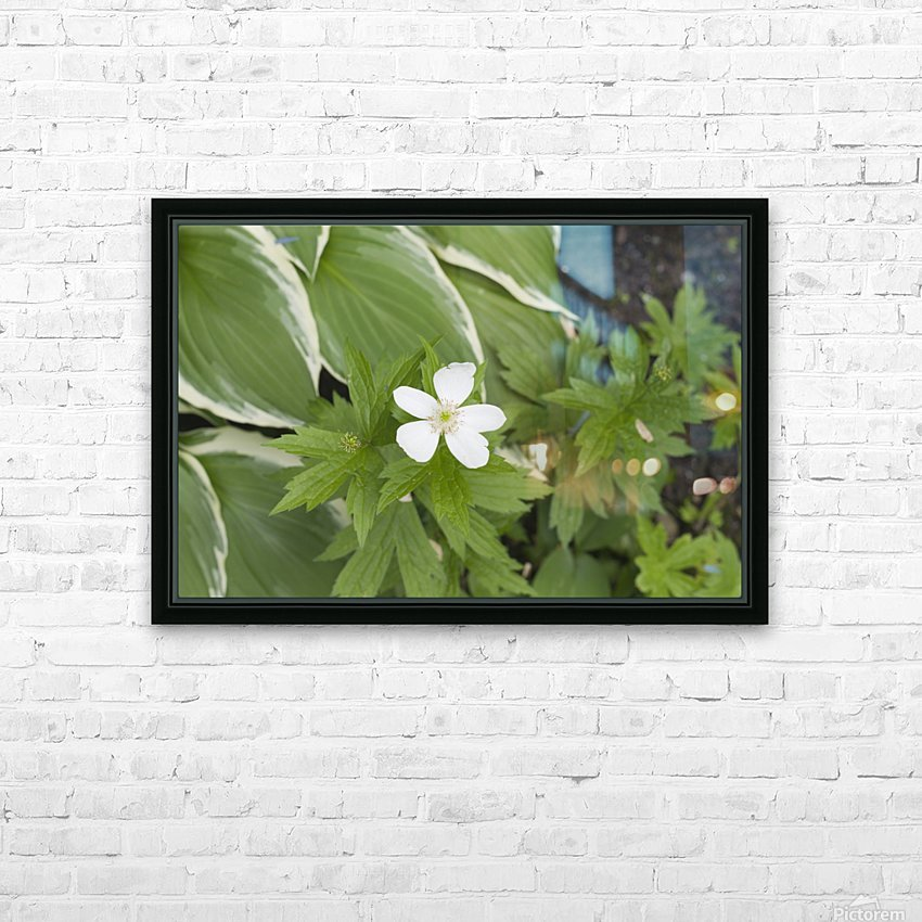 Wood Anenome HD Sublimation Metal print with Decorating Float Frame (BOX)