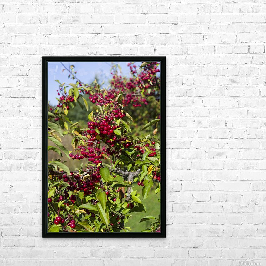 Sumac Bush in Autumn 2 HD Sublimation Metal print with Decorating Float Frame (BOX)