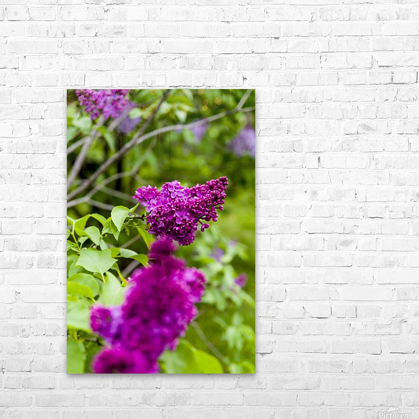 Purple Lilac Blossoms 2 HD Sublimation Metal print with Decorating Float Frame (BOX)