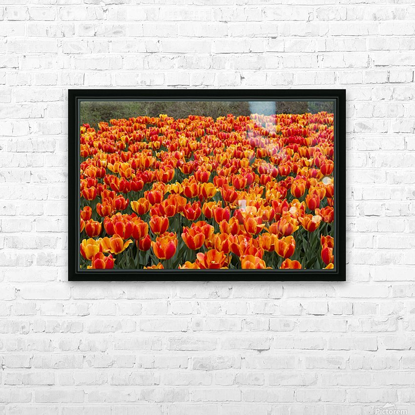 Ottawa Tulip Festival 9 HD Sublimation Metal print with Decorating Float Frame (BOX)