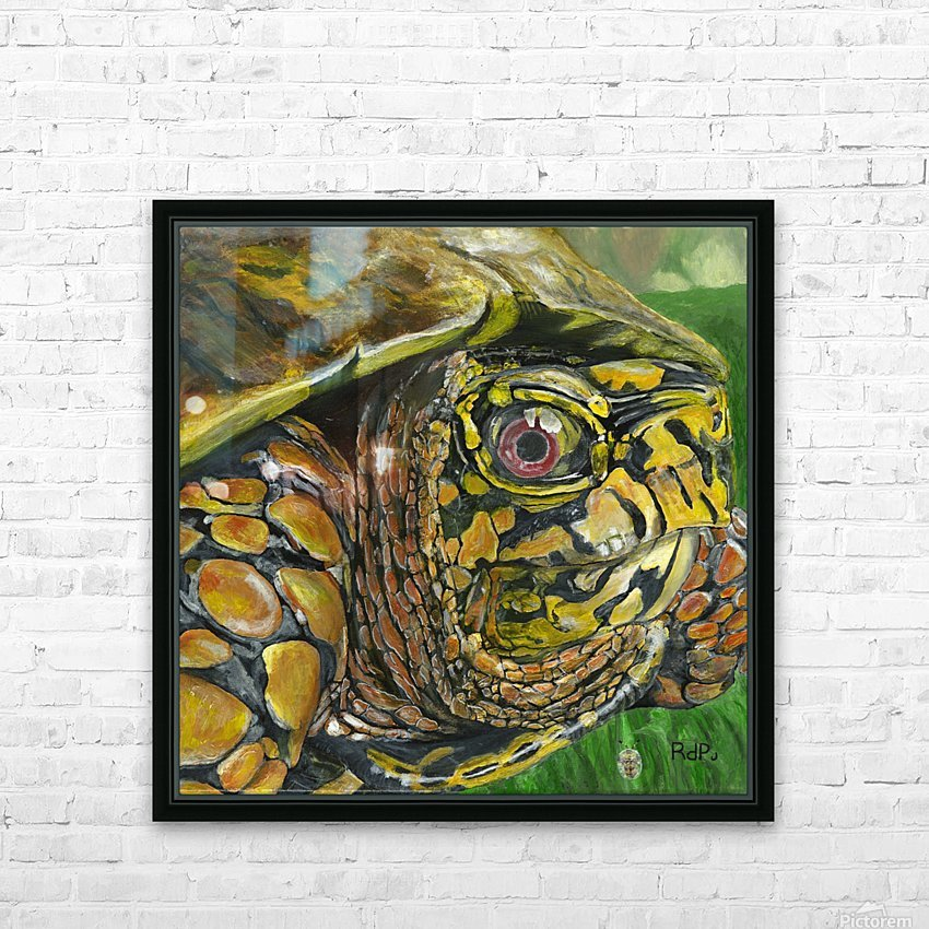 Box Turtle HD Sublimation Metal print with Decorating Float Frame (BOX)