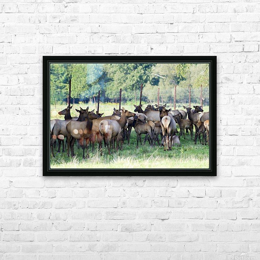 Elk Red Tailed Deer or Wapiti 16 HD sublimation métal imprimé avec décoration flotteur cadre (boîte)