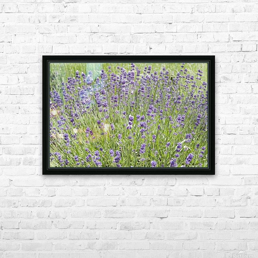 Lavender plants 7 HD Sublimation Metal print with Decorating Float Frame (BOX)