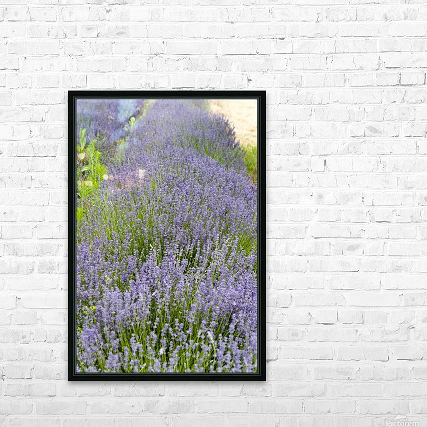 Lavender plants 7 HD Sublimation Metal print with Decorating Float Frame (BOX)