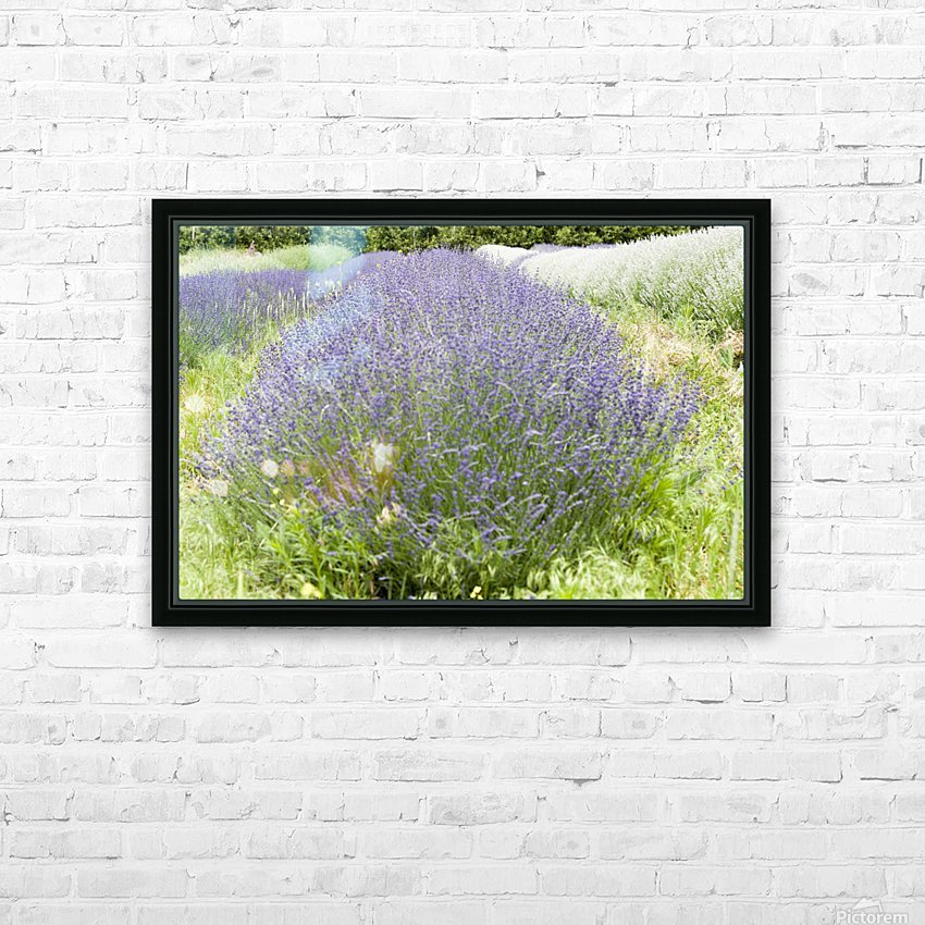 Lavender plants 1 HD Sublimation Metal print with Decorating Float Frame (BOX)