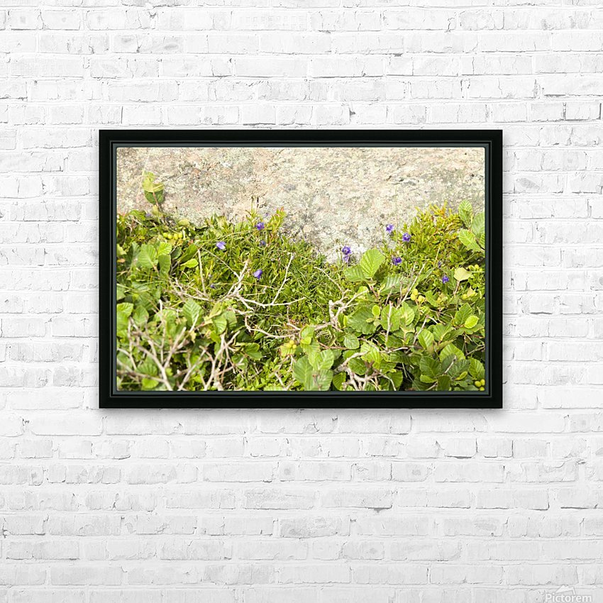 Cape Spears Flowers and vegetation  HD Sublimation Metal print with Decorating Float Frame (BOX)