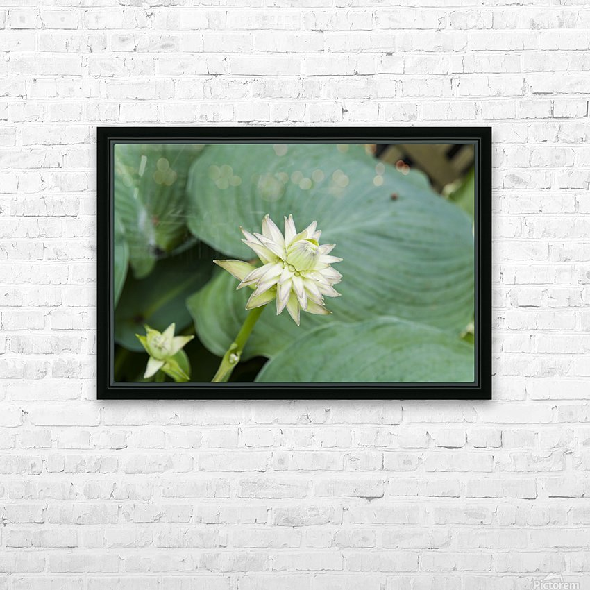 Hosta Bloom 1 HD Sublimation Metal print with Decorating Float Frame (BOX)