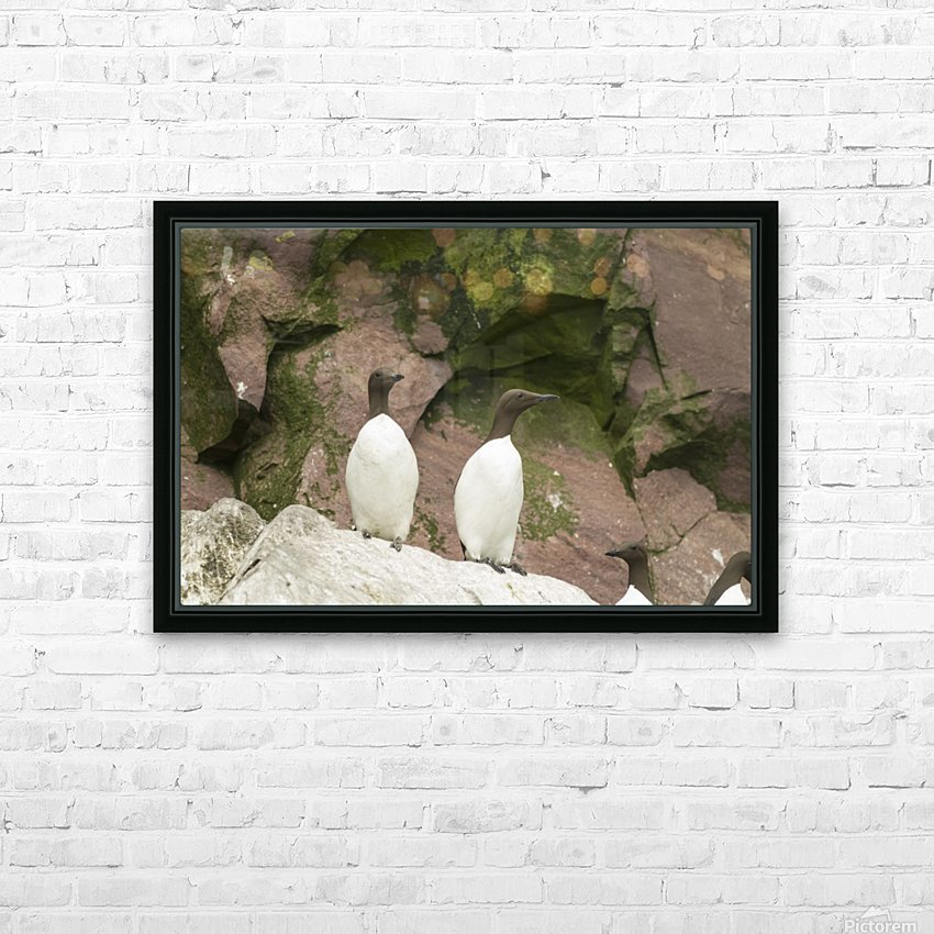 A murre pair 1 HD Sublimation Metal print with Decorating Float Frame (BOX)