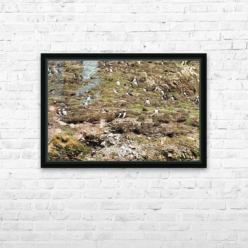 Puffins being puffins 6 HD Sublimation Metal print with Decorating Float Frame (BOX)