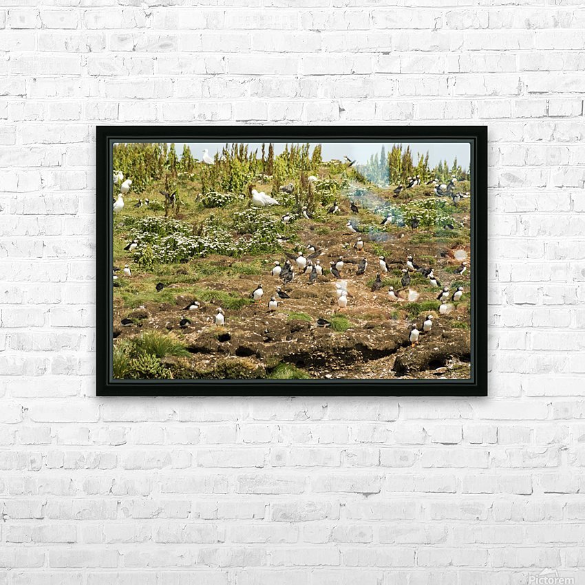 Puffins being puffins 2 HD Sublimation Metal print with Decorating Float Frame (BOX)