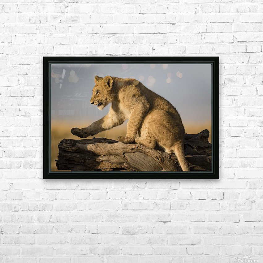 Small Step for Lionkind HD Sublimation Metal print with Decorating Float Frame (BOX)