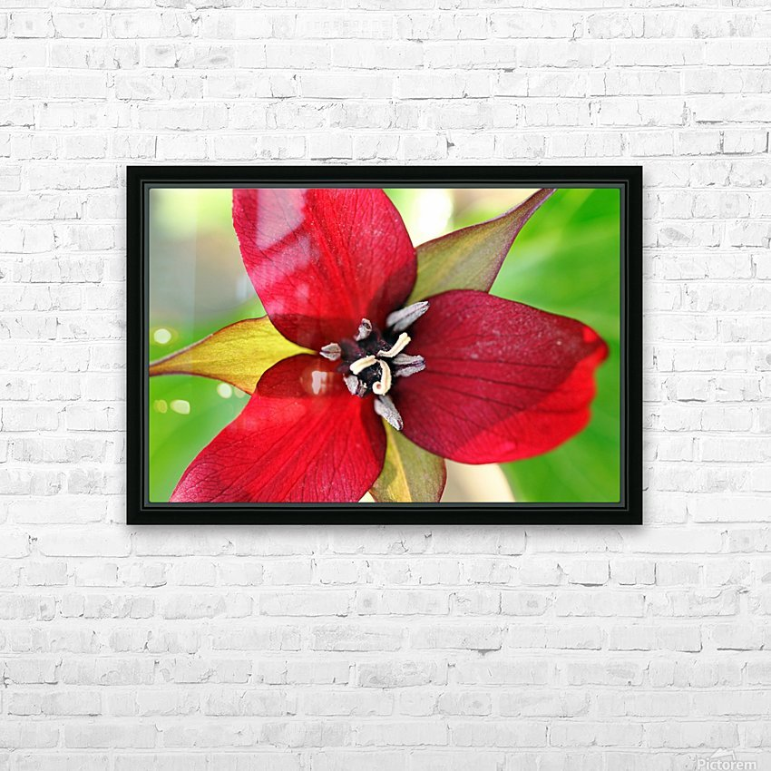 Dark Red Trillium HD Sublimation Metal print with Decorating Float Frame (BOX)