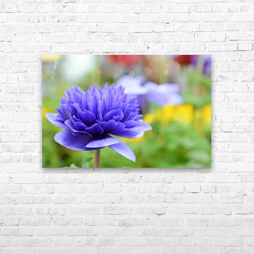 Blue Flowers Photograph HD Sublimation Metal print with Decorating Float Frame (BOX)