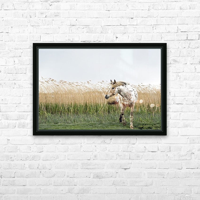 APPALOOSA HORSE HD Sublimation Metal print with Decorating Float Frame (BOX)