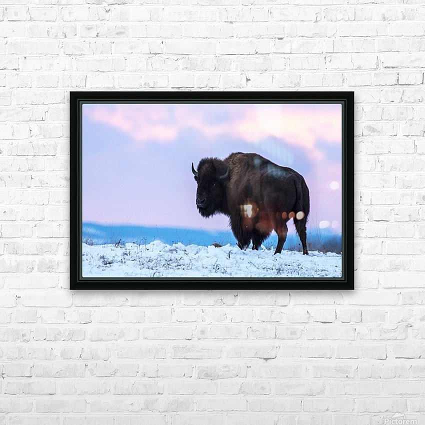 Buffalo HD Sublimation Metal print with Decorating Float Frame (BOX)
