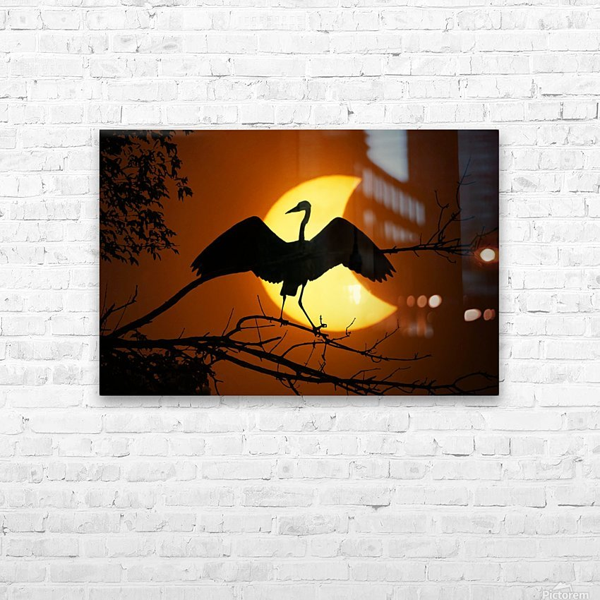 Egret Eclipse HD Sublimation Metal print with Decorating Float Frame (BOX)