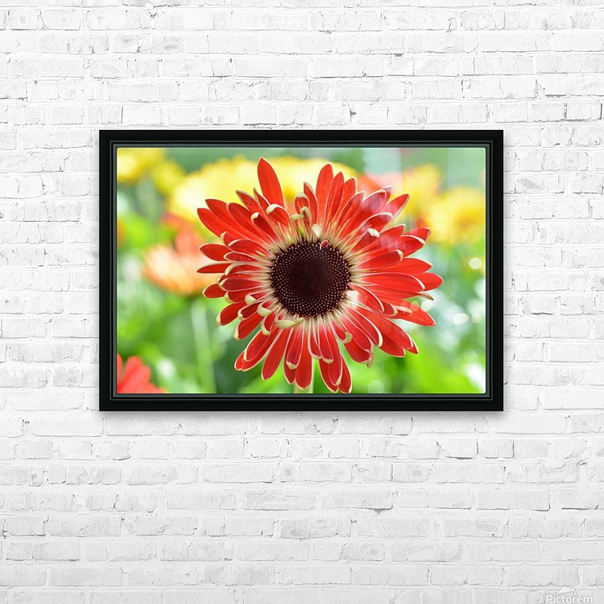 Red Flower Photograph HD Sublimation Metal print with Decorating Float Frame (BOX)