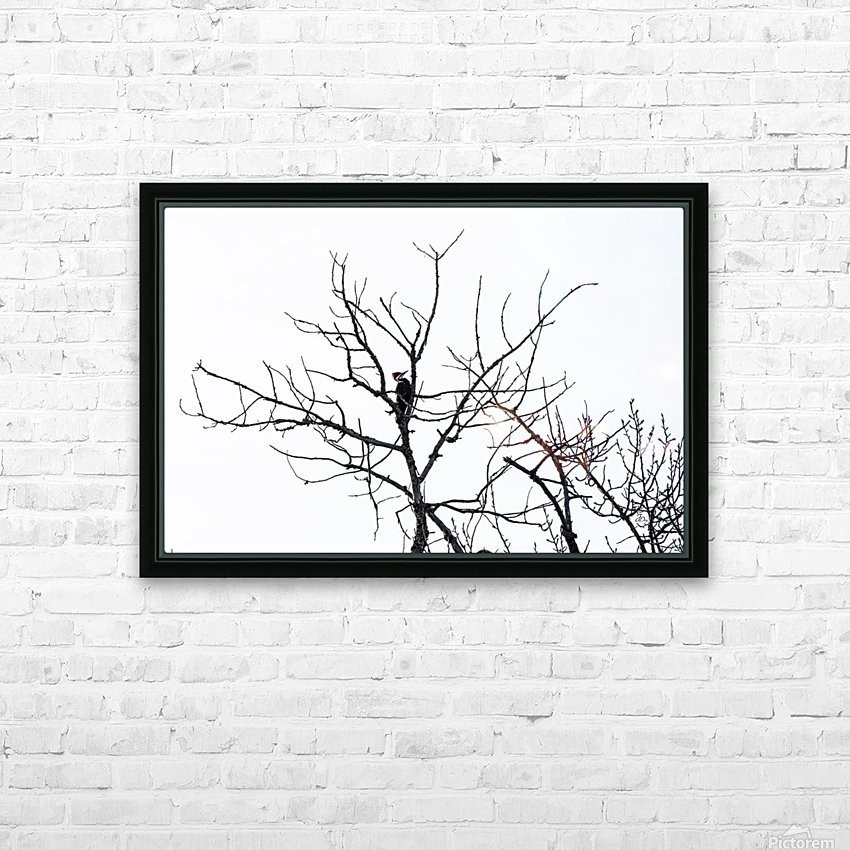 Pileated Woodpecker - Large HD Sublimation Metal print with Decorating Float Frame (BOX)