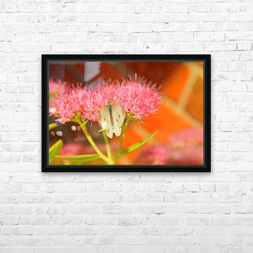 Little White Moth HD Sublimation Metal print with Decorating Float Frame (BOX)
