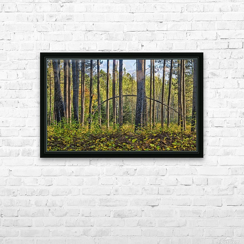 Stand of Trees HD Sublimation Metal print with Decorating Float Frame (BOX)