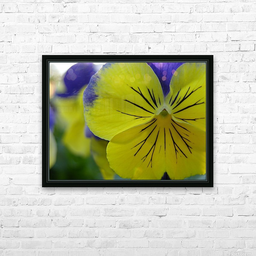 Yellow Pansy Photograph HD Sublimation Metal print with Decorating Float Frame (BOX)