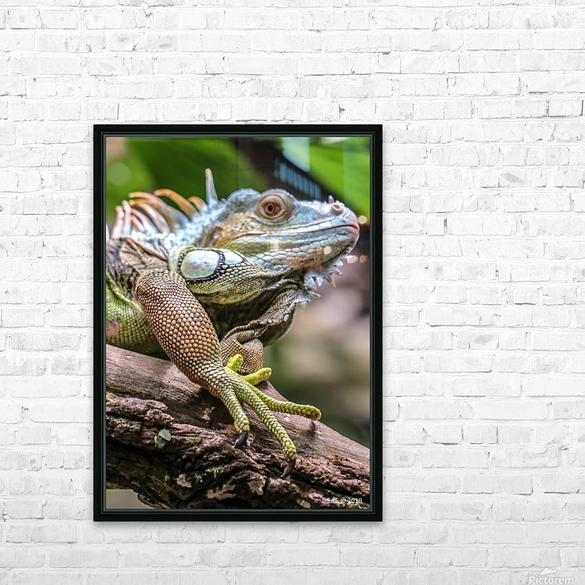 The Raptor HD Sublimation Metal print with Decorating Float Frame (BOX)