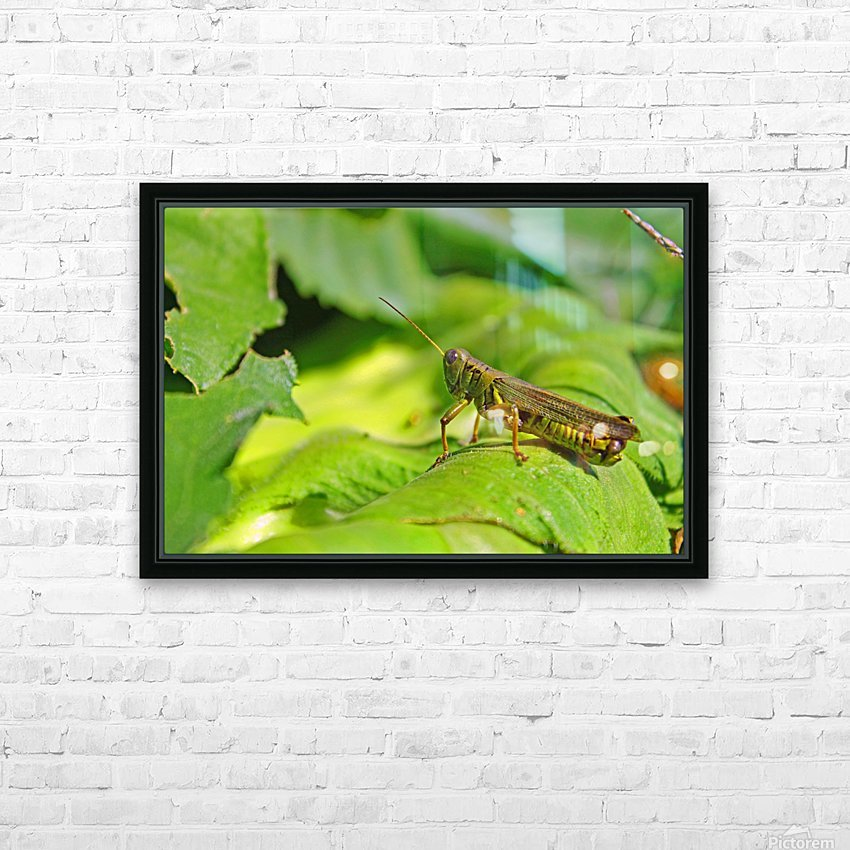 Chilling Grasshopper HD Sublimation Metal print with Decorating Float Frame (BOX)