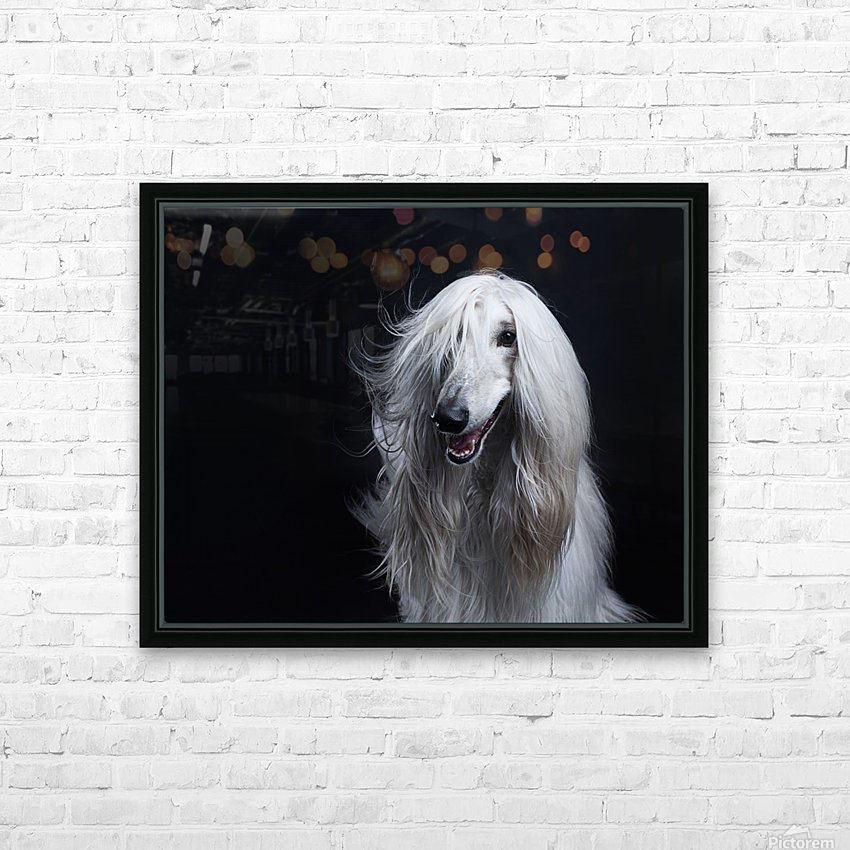 Afghan Hound Portrait HD Sublimation Metal print with Decorating Float Frame (BOX)