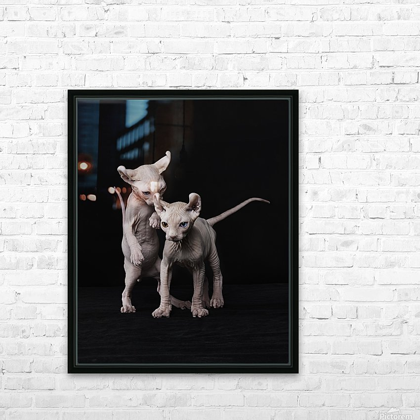 Elf Sphinx kittens HD Sublimation Metal print with Decorating Float Frame (BOX)