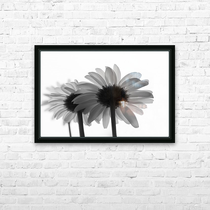 Daisies Rowing To The Left BW HD Sublimation Metal print with Decorating Float Frame (BOX)