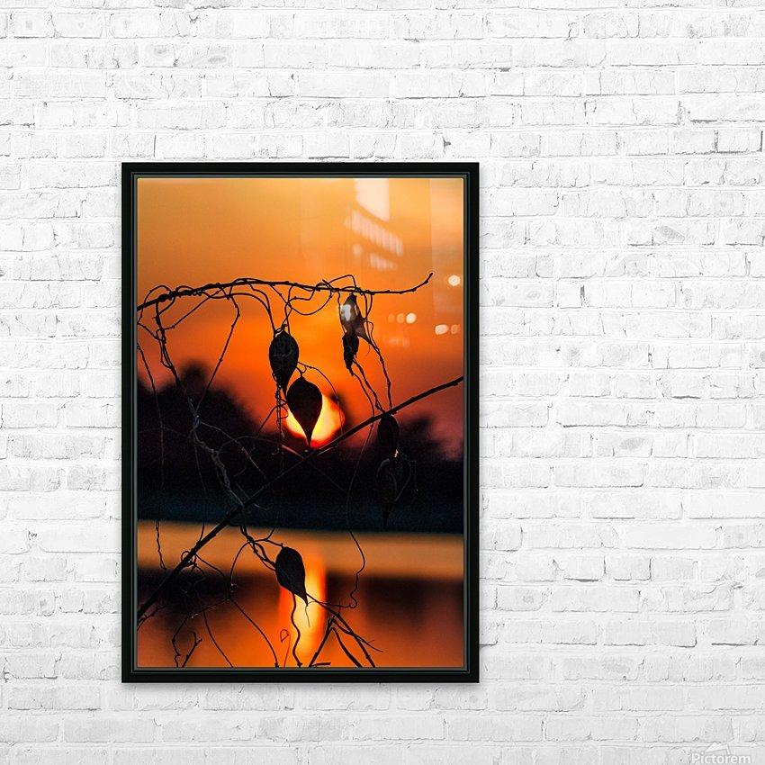 Vine Milkweed at Sunset HD Sublimation Metal print with Decorating Float Frame (BOX)