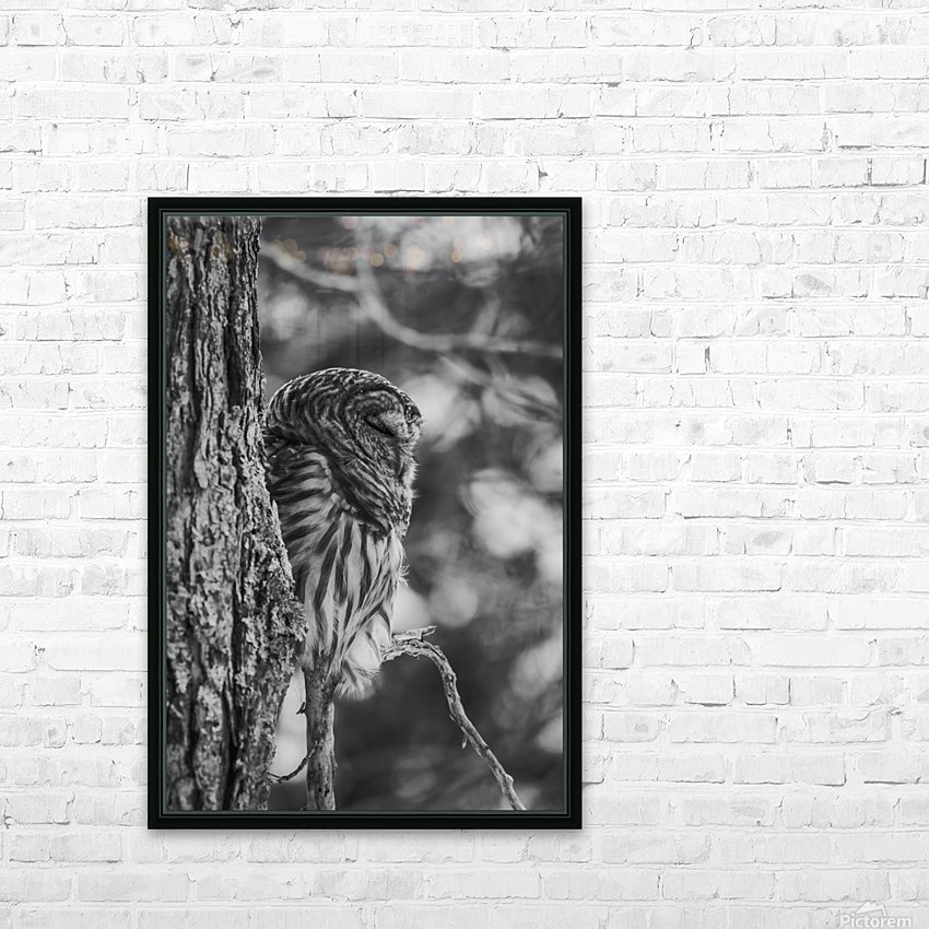 Black and white Barred Owl HD Sublimation Metal print with Decorating Float Frame (BOX)