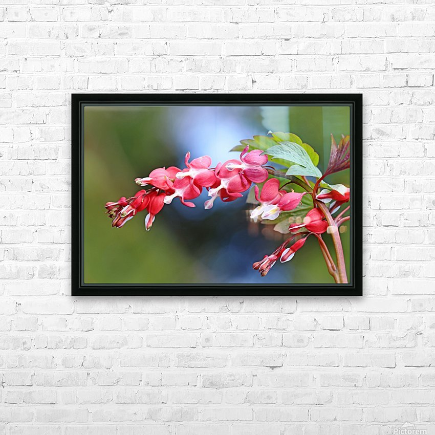 Natures Red Hearts HD Sublimation Metal print with Decorating Float Frame (BOX)
