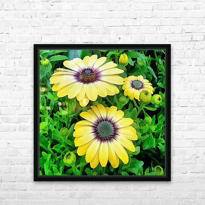 Osteospermum Serenity Blue HD Sublimation Metal print with Decorating Float Frame (BOX)